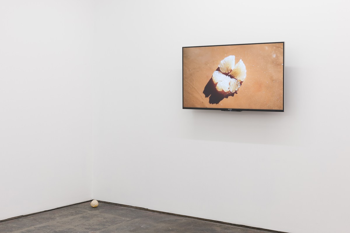Basic Instinct, installation view